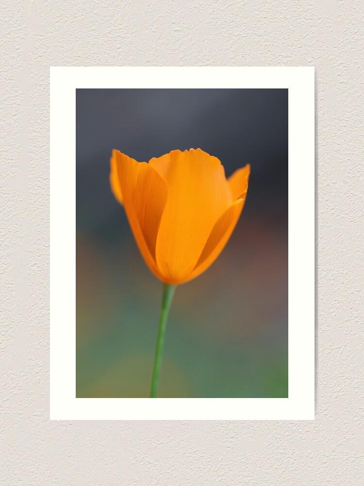Alternate view of Tufted Poppy Art Print
