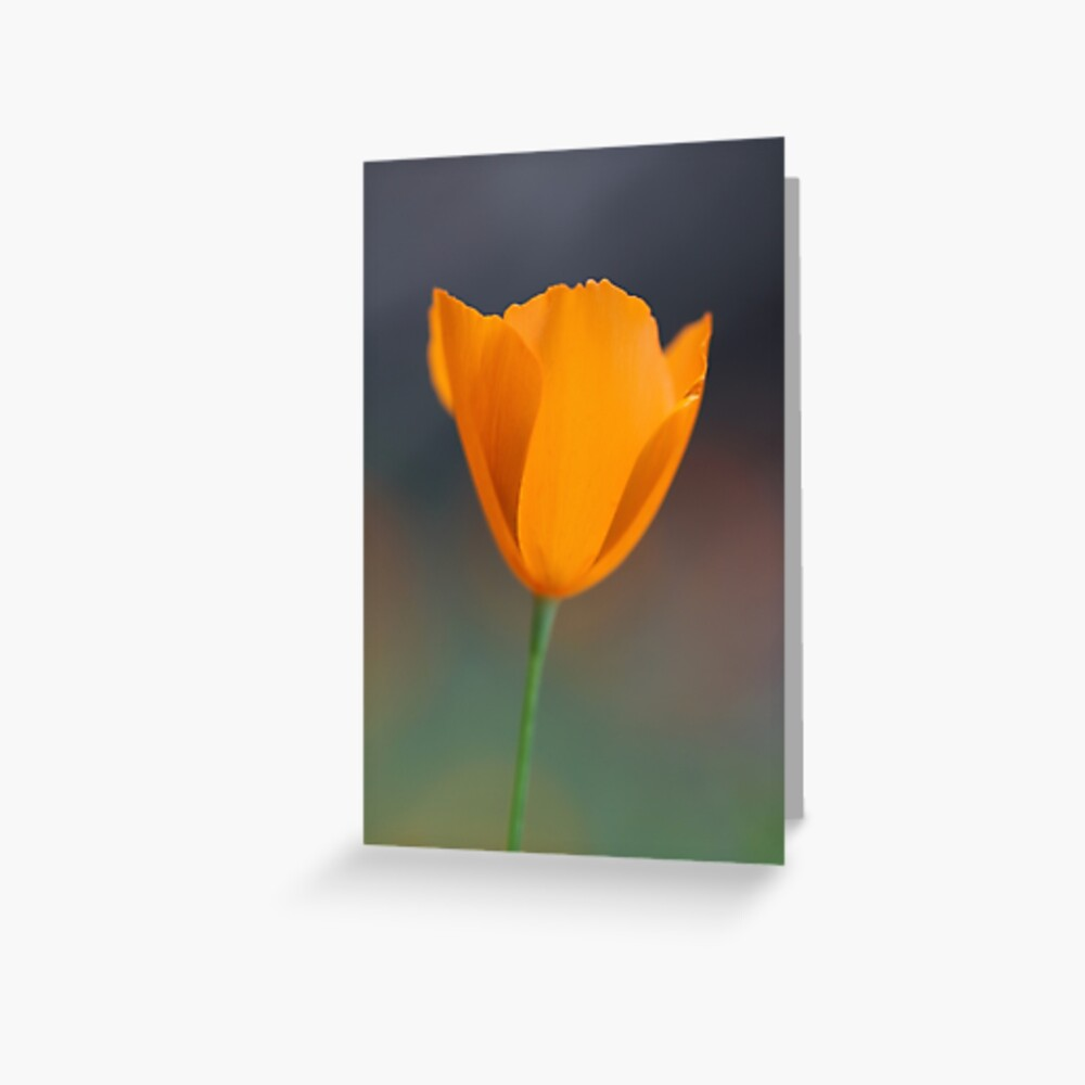 Tufted Poppy Greeting Card