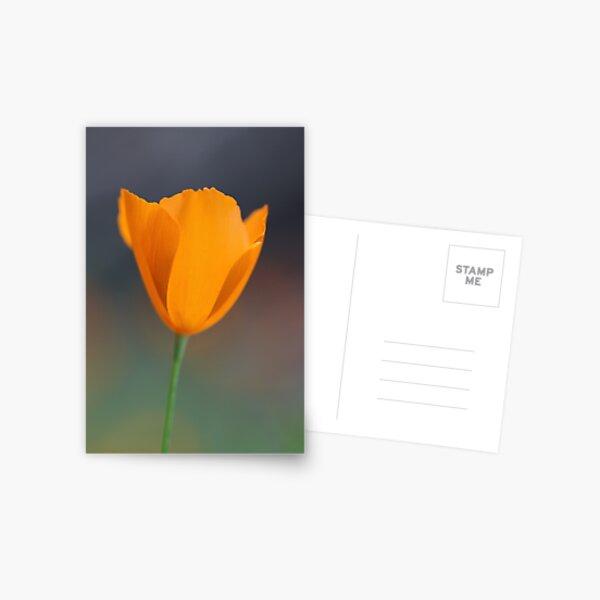 Tufted Poppy Postcard