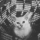 Basket cat by Larry  Grayam