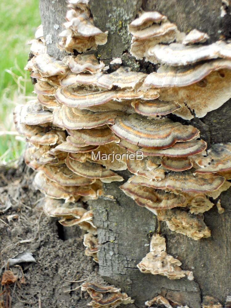 Colony of Whatsis Fungi by MarjorieB