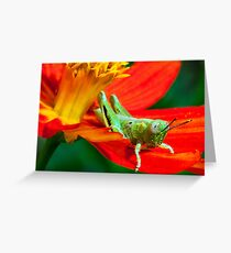 Grasshopper on Flower Petal Covered in Pollen Greeting Card