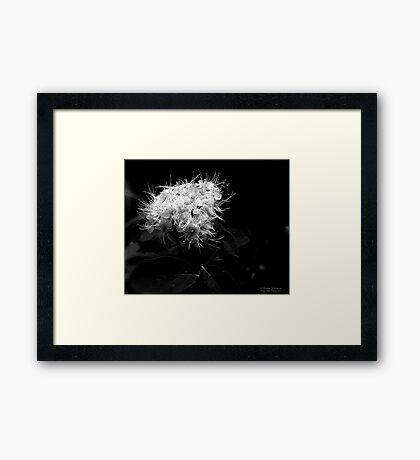 White Tendrils Framed Print