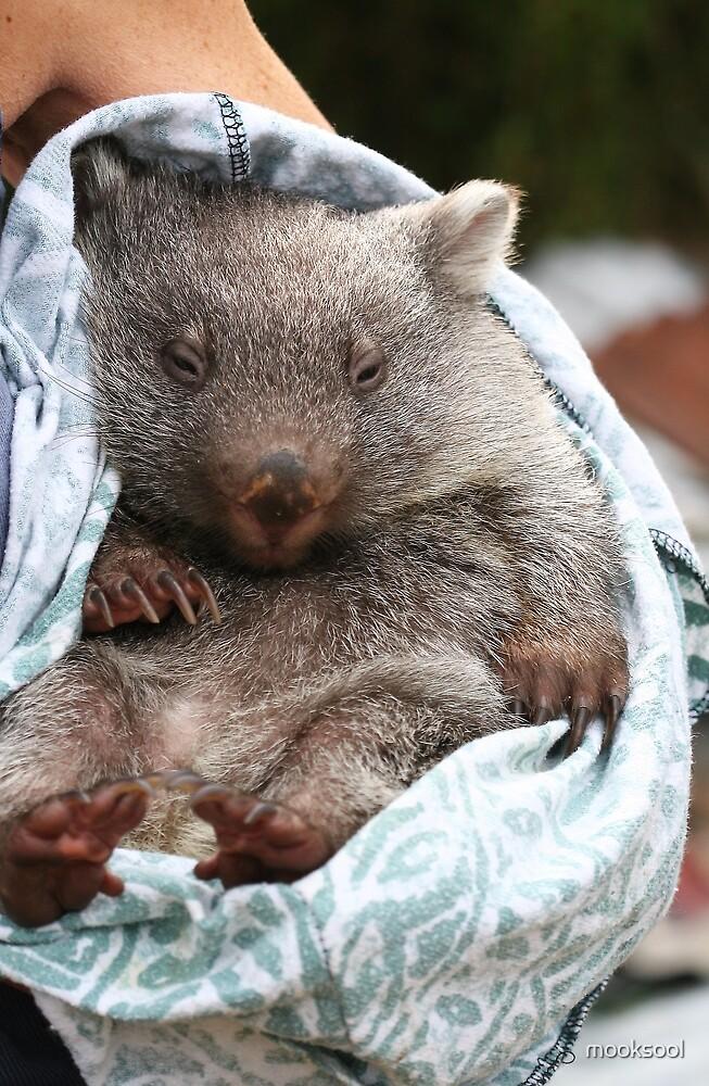 wombat bedtime by mooksool