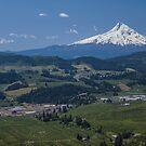 Mt. Hood at Hood River, Oregon by Kay Martin