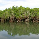 Mitchell Mangroves I by Reef Ecoimages