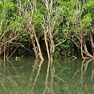 Mitchell Mangroves II by Reef Ecoimages