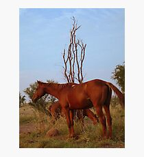 Bush Work Horse Photographic Print