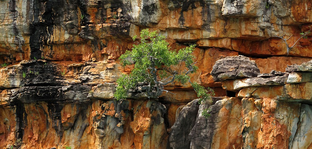 Tree and Rock by Reef Ecoimages