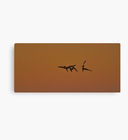 Celebration Bird Dance after a Whiting Capture Canvas Print