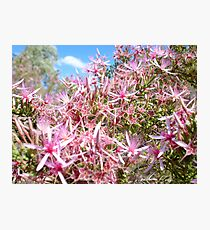 Turkey Bush Photographic Print