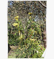 Volunteer Holly Tree Poster