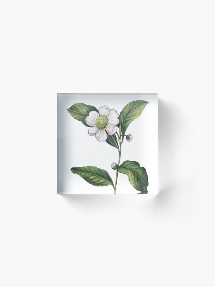 Alternate view of Watercolor Camellia Chinese Tea Acrylic Block