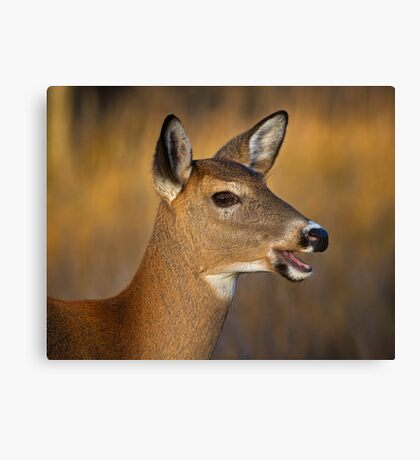 Profile of a Deer Canvas Print
