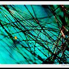 A Sea of Tangled Webs by MacroXscape