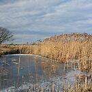 Frozen Fen - Wicken Fen Cambridgeshire by Robert Ellis
