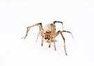 Mrs Spider by inkedsandra