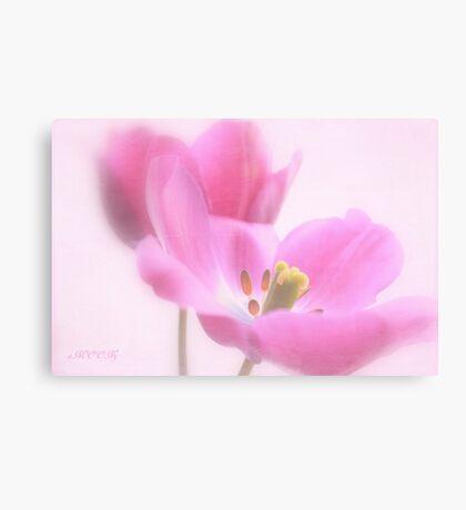 Pink tulip 1 Canvas Print