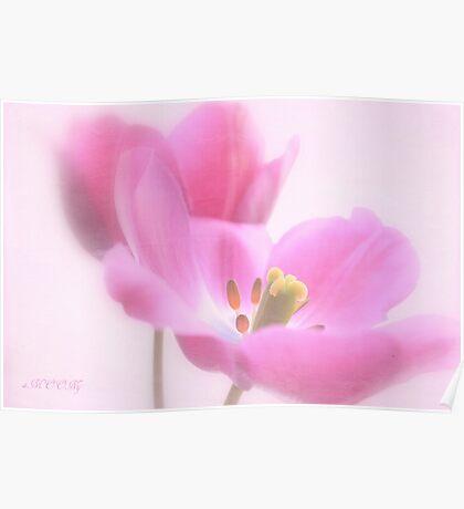 Pink tulip 1 Poster