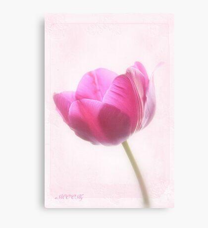 Pink tulip 3 Canvas Print