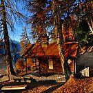 chapel in the woods by neil harrison
