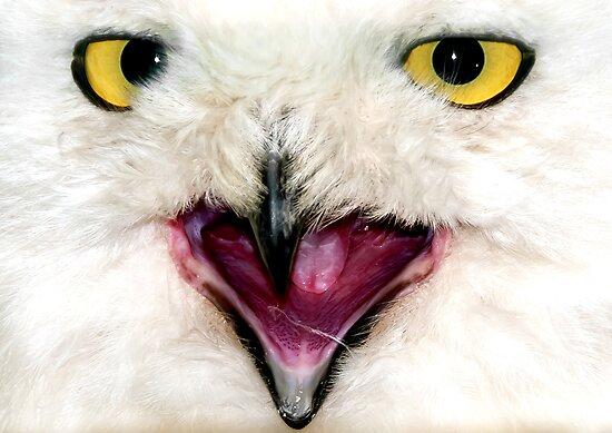 Owl Close UP by Svetlana Sewell