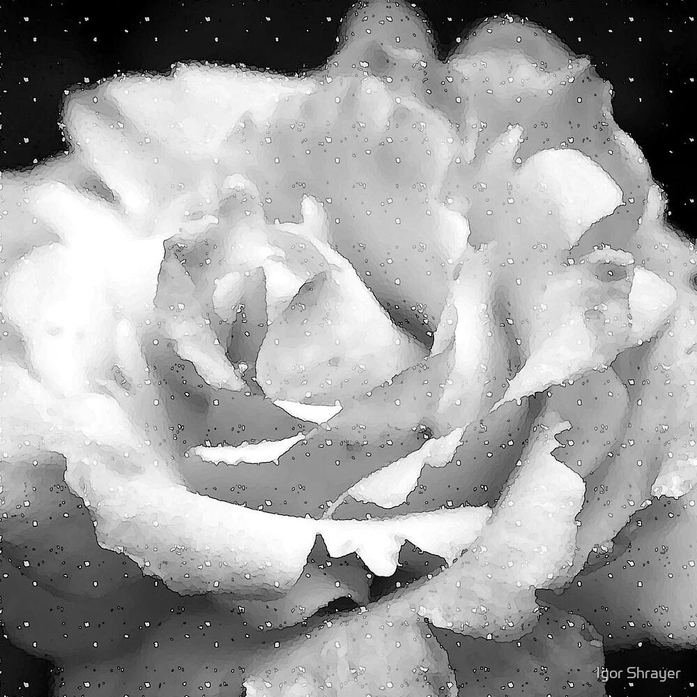 White Rose III by Igor Shrayer