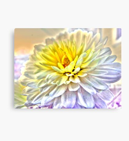 Two Tone Mum Canvas Print