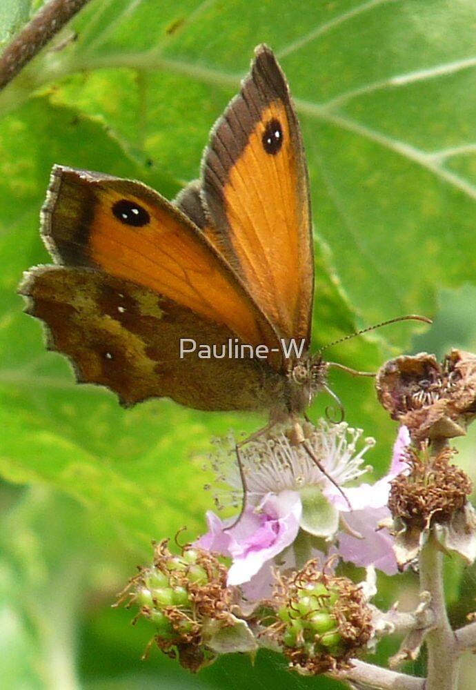 Gatekeeper butterfly  by Pauline-W