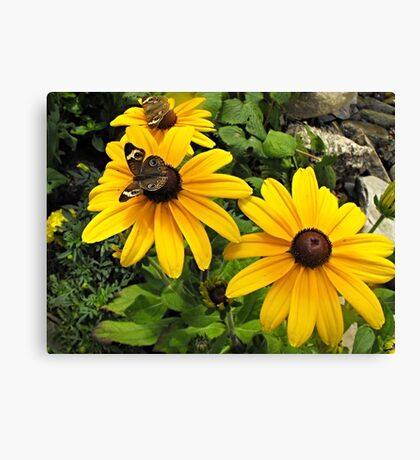 Yellow flowers and butterflies Canvas Print