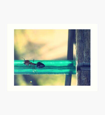 04-12-11:  Ants On The Clothesline Art Print