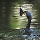 Cormorant & Catfish by J Jennelle