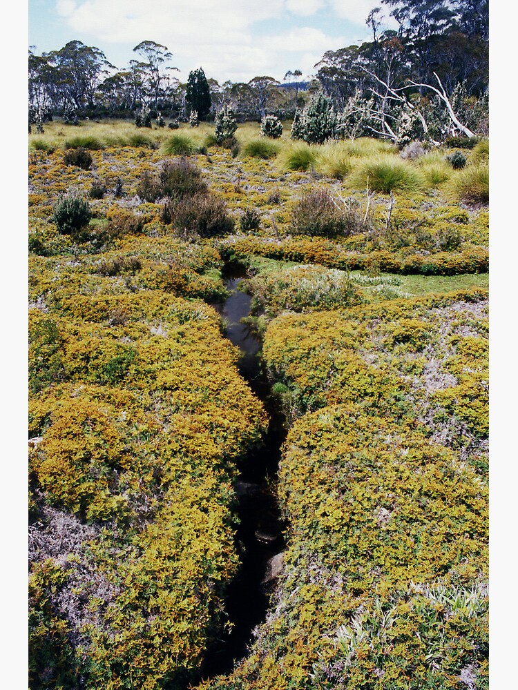 Shadow Walk, Lake St. Clair National Park, Australia by janemcdougall