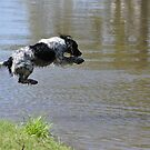 a springer in heaven by Leigh Monk