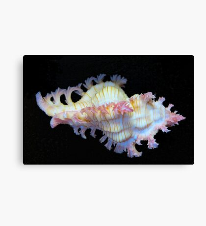 Tiny Murex Shell Canvas Print