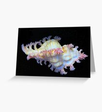 Tiny Murex Shell Greeting Card