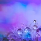 Sprinkles and Dewdrops by Avena Singh