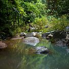 Jungle stepping stones by Melanie Simmonds