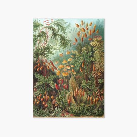 Vintage Plants Decorative Nature Painting Illustration Artwork Art Board Print