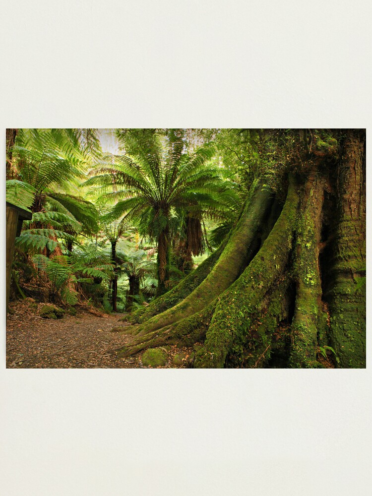 Alternate view of Forest Track Photographic Print