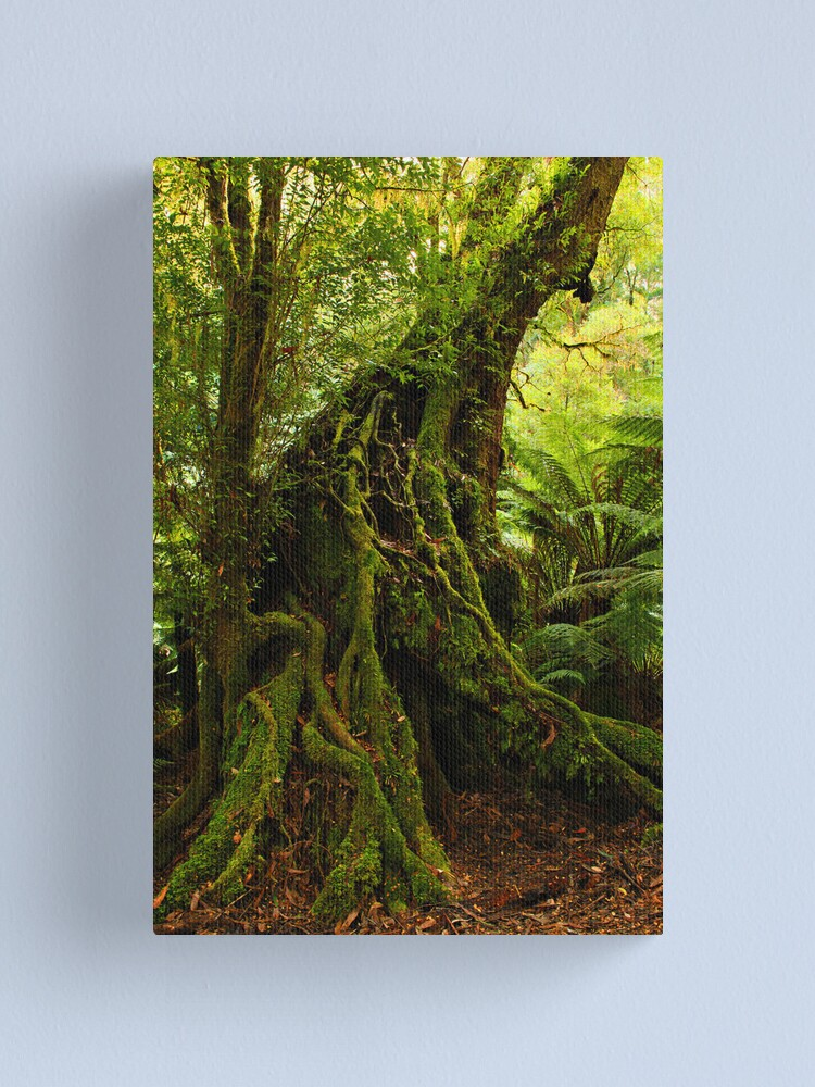 Alternate view of Rainforest Trail Canvas Print