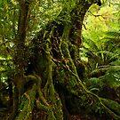 Rainforest Trail by Greg Earl