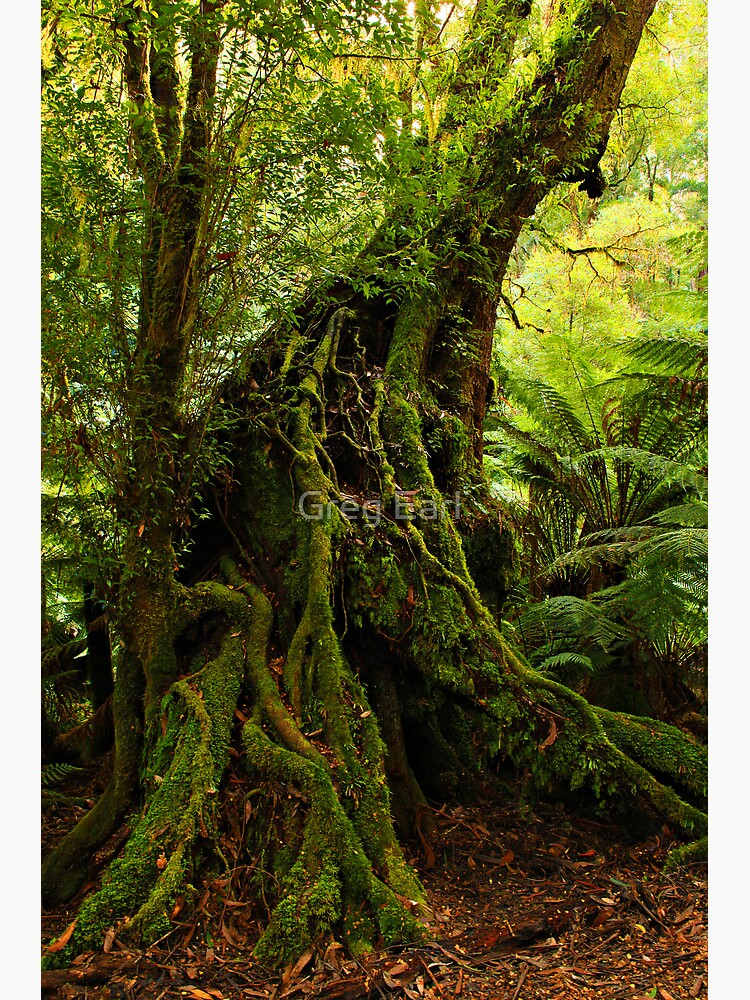 Rainforest Trail by GregEarl