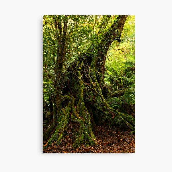 Rainforest Trail Canvas Print