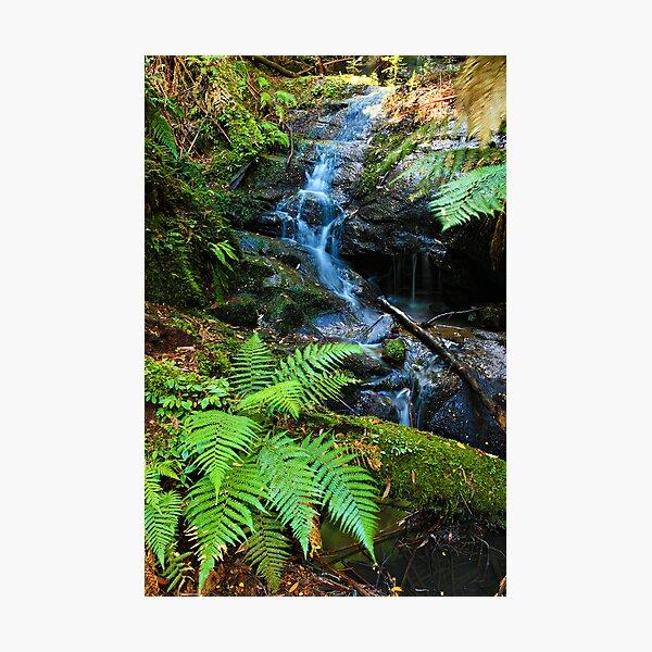 Mountain Stream - Tarra Valley Photographic Print