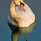 Reflection Swan by Rustyoldtown
