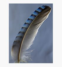 Feather magic Photographic Print