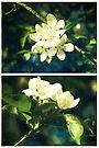 Spring - Crabapple Blossom by Sybille Sterk