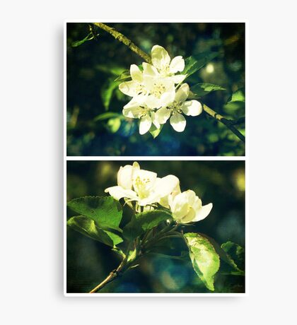 Spring - Crabapple Blossom Canvas Print