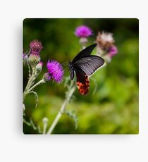 Butterfly And Thistle Canvas Print